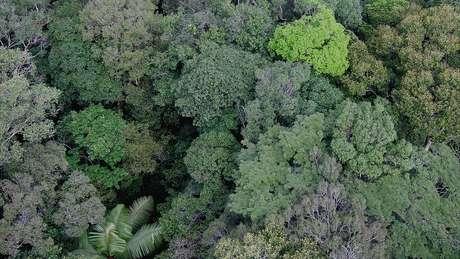 Base de dados será fundamental para conservar espécies, diz especialista