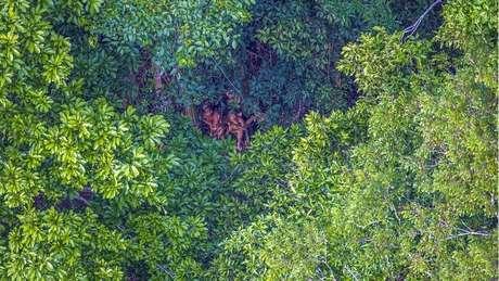 Tribo isolada foi identificada e fotografada no Acre