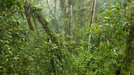 A hibridização natural é um processo mais comum para plantas que para animais.