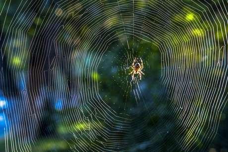 Todas las arañas del mundo juntas pesan 25 millones de toneladas