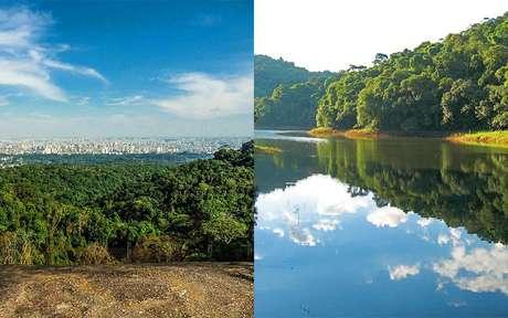 Um oásis em meio a Selva de Pedra: o Parque Estadual da Cantareira é o paraíso que você precisa conhecer!