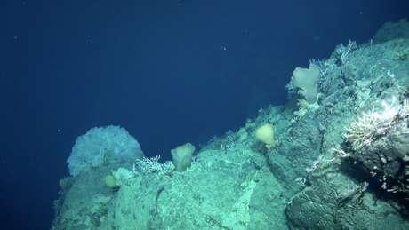 A descoberta do Mont Tropic levanta o debate sobre vantagens e riscos da mineração no fundo do mar