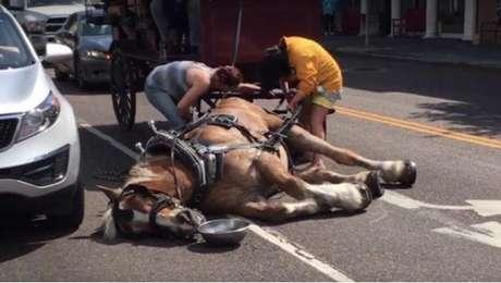 Caballo se desvanece mientras llevaba un carruaje con pasajeros