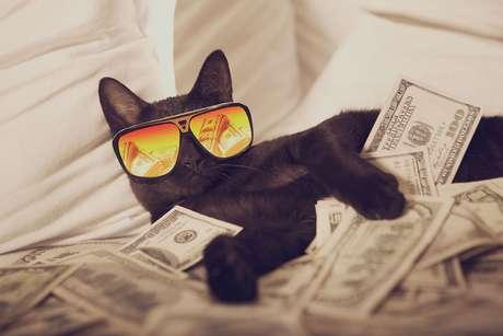 Lucky, o gato preto da sorte
