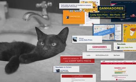 Comprovantes de prêmios recebidos pelo gato