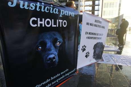 Caso Cholito: Imputados por brutal golpiza a perro quedan sin medidas cautelares