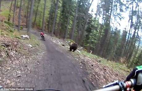 Ciclistas en pleno descenso son perseguidos por un oso — Youtube