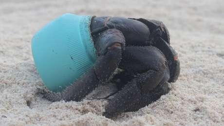 Animais, como crustáceos, acabam afetados pelo lixo