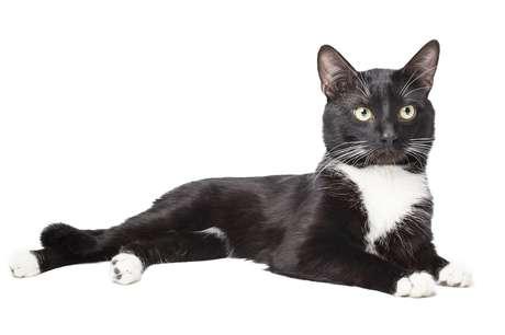 Un gato habla como Morgan Freeman