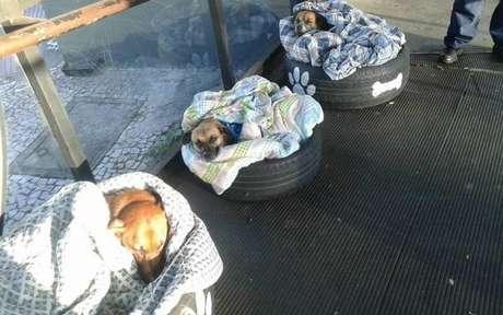 Cães de Curitiba ganham cobertor para enfrentar o frio