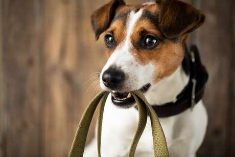 Passear com os cães do abrigo é uma ótima forma de fazer o dia deles mais feliz