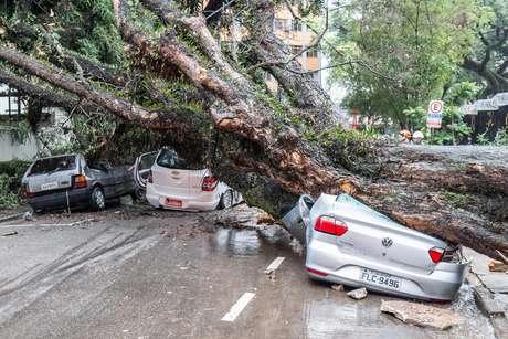 Queda de árvore de grande porte na rua Itapeva, no bairro da Bela Vista
