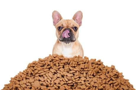 Cuidado: aumentar a quantidade de comida de deus bichos no inverno pode causar sobrepeso.