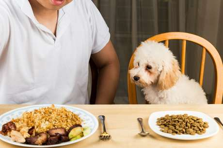 <p><strong>cachorro - comida.jpg</strong></p>