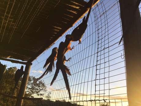 Ibama e ONG soltam cerca de 30 araras-canindé e tucanos apreendidos no comércio ilegal de animais; muitas das aves resgatadas do tráfico precisam ser 'treinadas' para se adaptar.