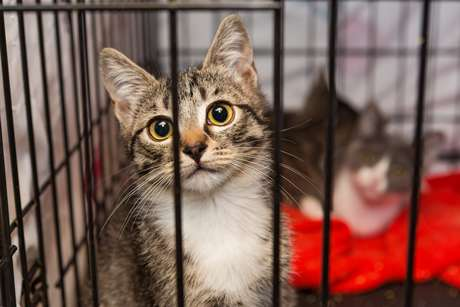 Projeto foi criado para incentivar doação de felinos