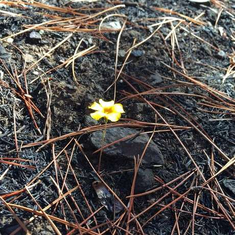 Plantas e algumas flores começaram a surgir no terreno