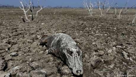 Lago ressecado no Paraguai: estudo ressalta que os danos causados pelo calor e a seca serão graves