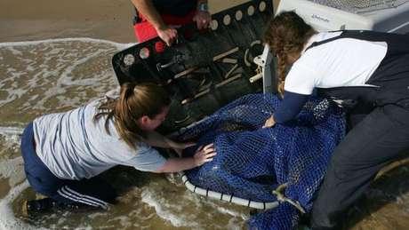 Veterinária socorre leão marinho
