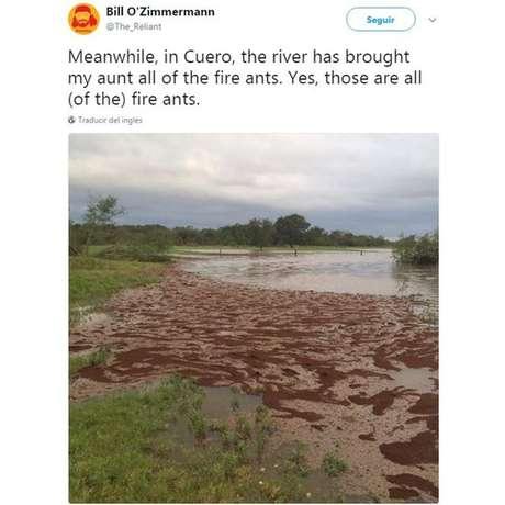 Rede de formigas de fogo