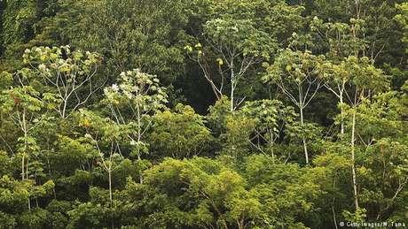 Amazônia leva umidade para toda a América do Sul, influencia regime de chuvas na região, contribui para estabilizar o clima global e ainda tem a maior biodiversidade do planeta.