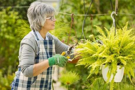 Cuidar do jardim requer dedicação. Isso inclui a limpeza das ferramentas que você usa