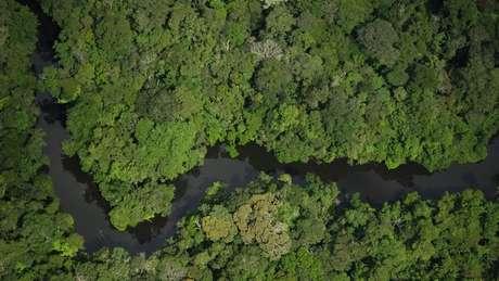 Extinção de reserva foi promovida sem consulta ao Congresso e à sociedade civil