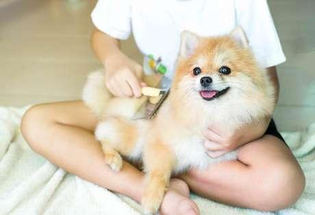 Escovar o pelo dos animais ajuda a evitar fios espalhados pelos ambientes