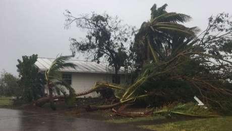Árvores caídas na porta de uma casa