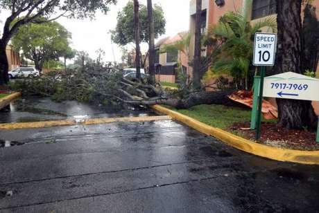 Miami - Árvore caída na pista devido aos fortes ventos das primeiras chuvas ligadas ao Furacão Irma em Miami