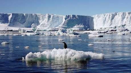 A maioria dos resíduos de DNA encontrados pertencem a espécies de animais que vivem em outras partes da Antártida, mas outros não puderam ser identificados