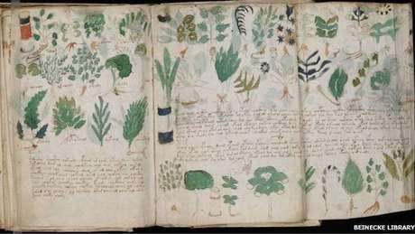 Páginas do manuscrito medieval mostram plantas