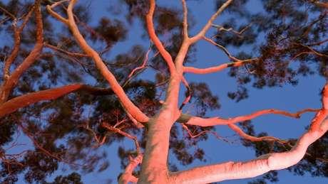 'As árvores são poemas que a Terra escreve no céu', escreveu o poeta americano-libanês Kahlil Gibran. (Crédito: Peter Adams Photography Ltd/Alamy)