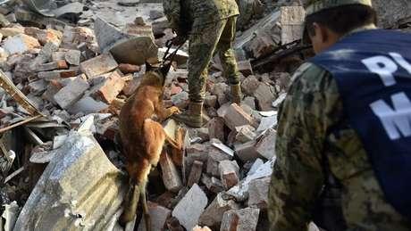 Animais precisam enfrentar condições adversas