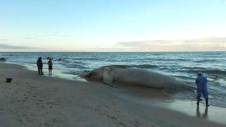 Com 95 mortes, número de baleias encalhadas na costa brasileira bate recorde em 2017 | Foto: Instituto Baleia Jubarte