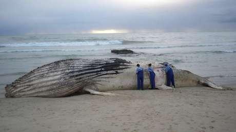 Lixo e redes de pesca são apontados como algumas das causas das mortes de baleias no litoral brasileiro | Foto: Instituto Baleia Jubarte