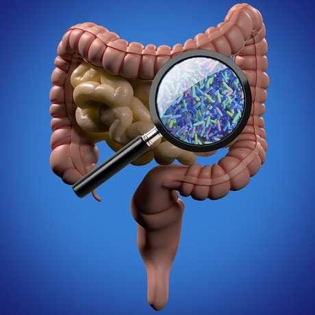 Lupa mostra bactérias no intestino