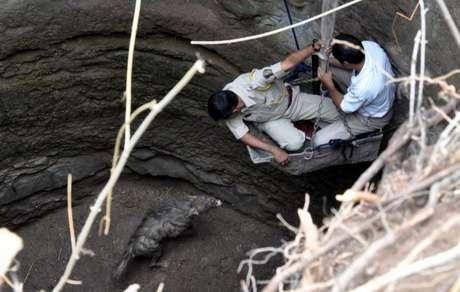 Guardas florestais resgatam uma hiena de um poço seco em 2013