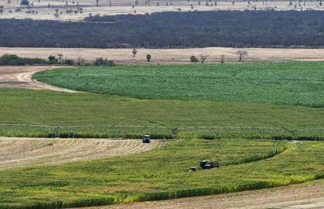 Plantação de milho em Limoeiro do Norte, no Estado do Ceará, Brasil 15/01/2015 REUTERS/Davi Pinheiro