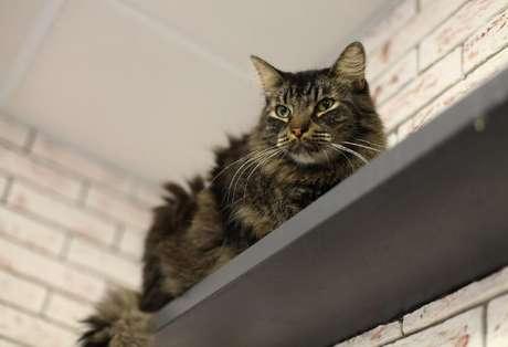 Crie espaços para seus gatos ficarem confortáveis em casa