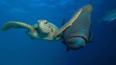 Tapa de tartaruga em peixe ficou entre finalistas   Troy Mayne