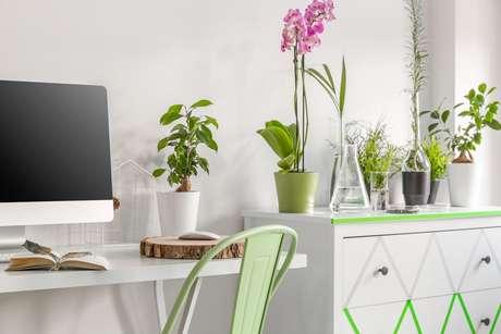 Plantas e flores trazem muito mais harmonia e tranquilidade ao ambiente/