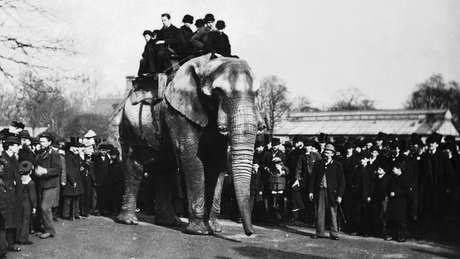 Jumbo passeia com visitantes do zoológico de Londres; peso provocou lesões nos quadris e joelhos do elefante | Foto: Wiki Commons