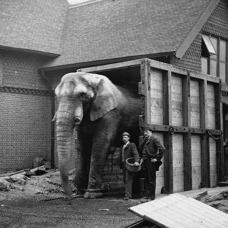 O cuidador de Jumbo, Matthew Scott, foi a única pessoa que conseguiu acalmar o elefante para embarcar no navio rumo aos Estados Unidos | Foto: Wiki Commons