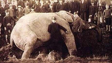 Matthew Scott, o cuidador de Jumbo, aparece junto às orelhas do elefante em foto tirada após a morte do animal | Foto: Wiki Commons