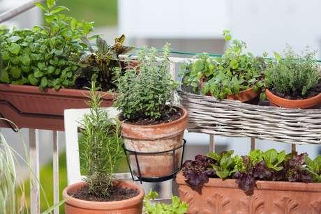 Você pode plantar temperinhos em diversas superfícies diferentes, use de acordo com seu espaço