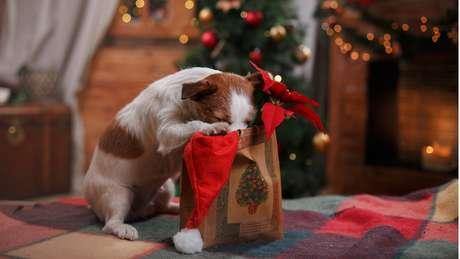 Cachorros costumam xeretar comidas e decorações de Natal | Foto: Getty Images