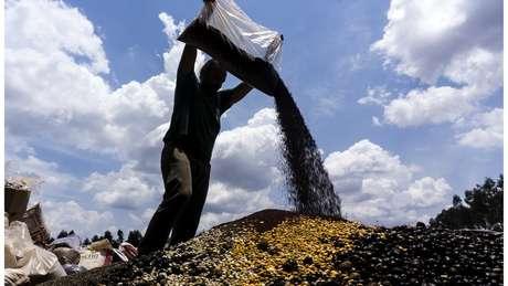 Muvuca, como é chamada a mistura de sementes de diferentes espécies para recuperação ambiental de áreas degradadas | Foto: Rogério Assis/ISA