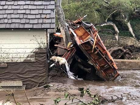Cão farejador busca por vítimas em casa danificada por deslizamentos na Califórnia 09/01/2018  Mike Eliason/Corpo de Bombeiros de Santa Barbara/Divulgação via REUTERS