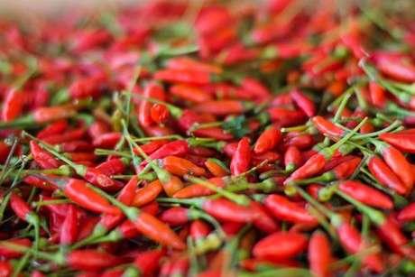 Diferentes tipos de pimentas: pimenta malagueta